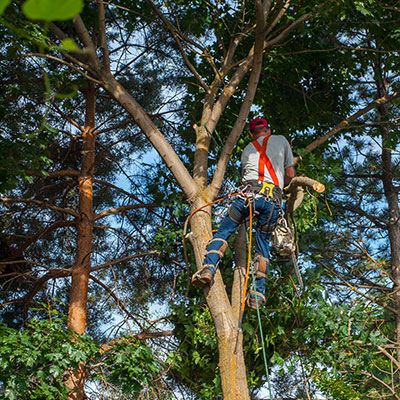 tree service gulf gate estates fl