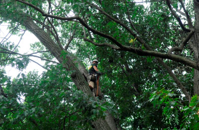 tree service laurel park fl