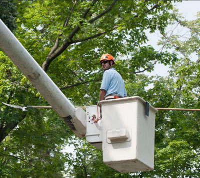 tree service ridge wood heights fl