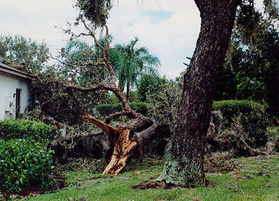 tree trimming removal south venice fl
