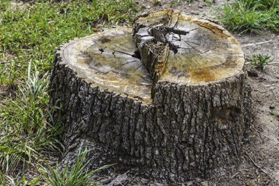 stump removal sarasota fl